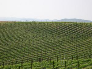 endless_vineyards_1