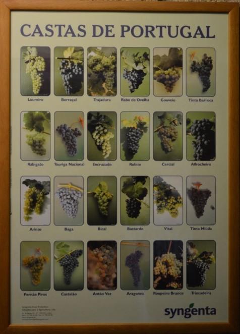 Portuguese Grape Varieties