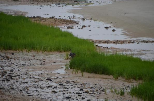 cape cod beach DSC_0771
