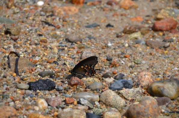 Butterfly on the sand...