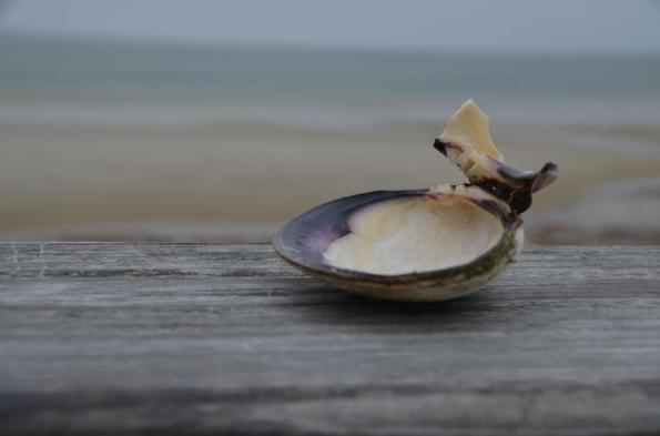 seashell DSC_0839
