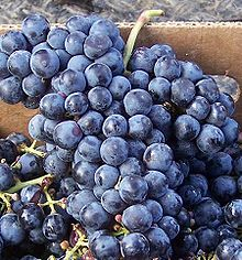 Cabernet Franc grapes, as shown in Wikipedia
