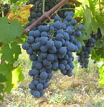 Carménère grapes. Source: Wikipedia