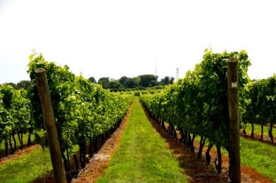 Vineyards and Newport Vineyards