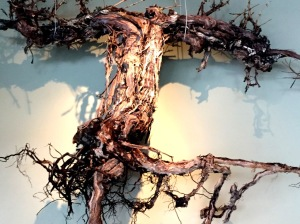 Sparkman Cellars vine root