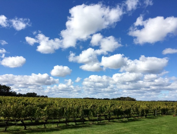 Ahhh  Long Island Wine Country