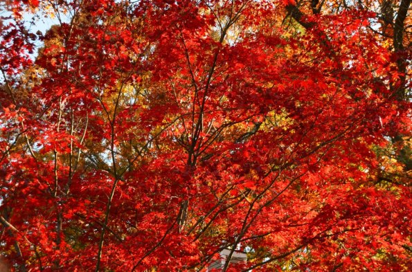 New England Fall Colors