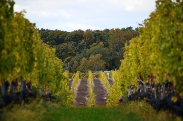 Long Island Vineyards 1