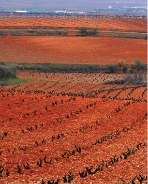 Beautiful Cariñena Vineyards. Source: Cariñena DOP
