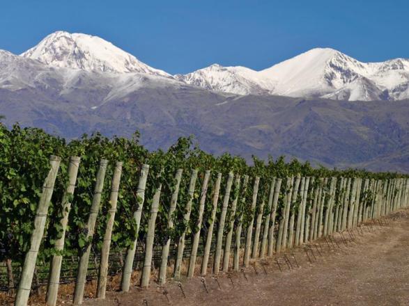 Rutini Vineyards