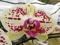 Orchids