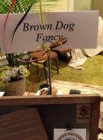 Brown Dog Fancy Mustars