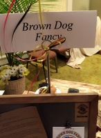 Brown Dog Fancy Mustars