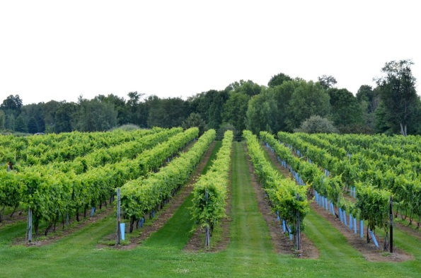 Vineyards at Clermon winery