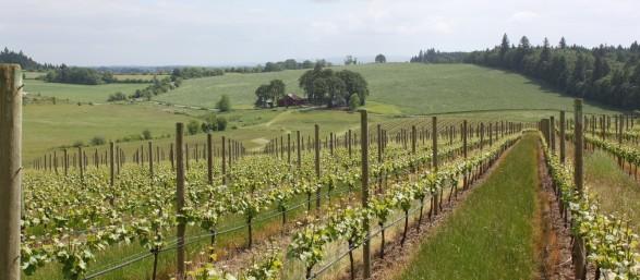 Ghost Hill Cellars Vineyard