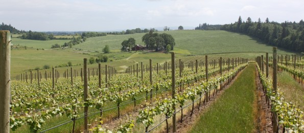 Ghost Hill Cellars Vineyard