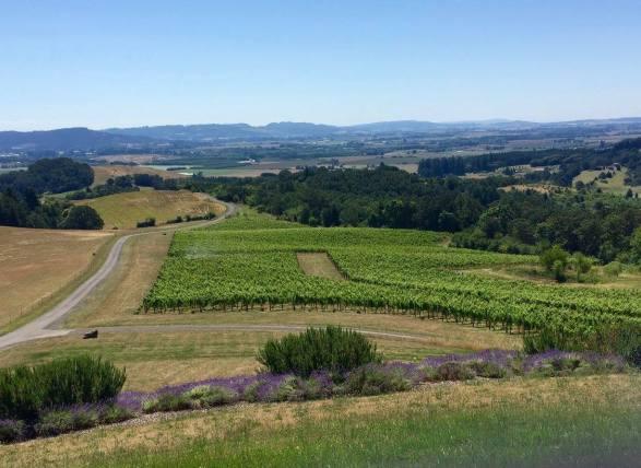 Vineyard View Youngberg Hill Vineyards