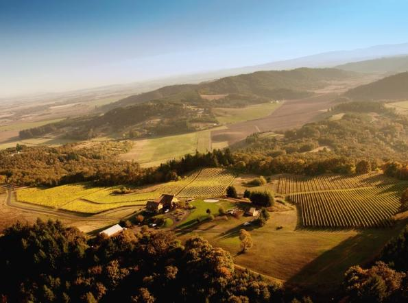 Youngberg Hill Vineyards Aerial Photo