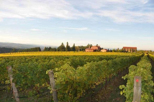 Alloro Tuscan Vineyard