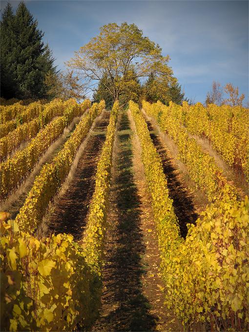 Lenne Vineyard