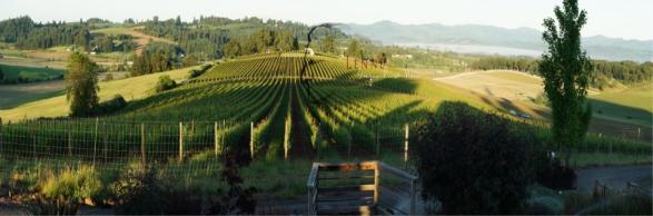 lenné vineyard
