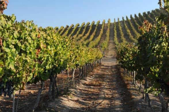 Viña Maipo vineyards