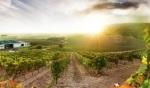 Cepa 21 vineyard