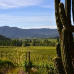 Viña Valdivieso vineyards