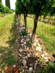 Rocky soil of Franciacorta