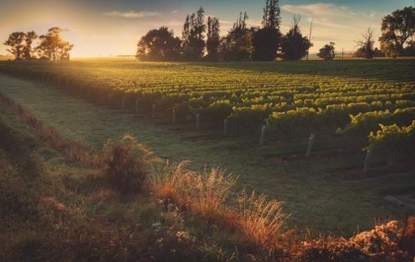 Wairau River Vineyards