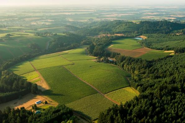Aerial View over Knudsen Vineyard, Dundee Hills, Willamette Valley, Oregon