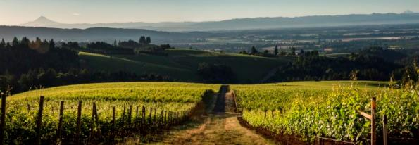Knudsen Vineyards, Dundee Hills, Willamette Valley, Oregon