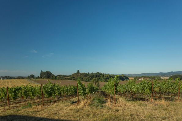 Maverick Vineyard