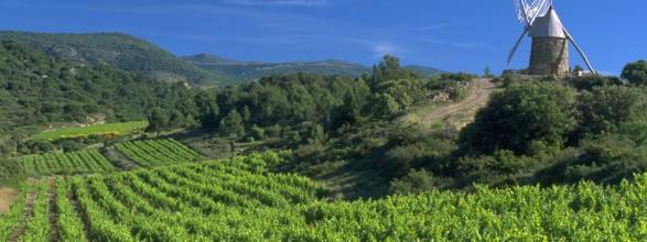 Languedoc image