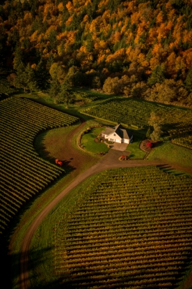 Aerial view over Le Cadeau Vineyard, Chehalem Mountain AVA, Willamette Valley, Oregon. Source: Le Cadeau Vineyard