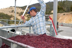 6 Feeding_crushed_red_wine_grapes_into_the_fermenter