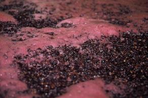 7 Stefano_Lubiana_Pinot_Noir_ferment_vintage_2010