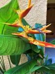 Cancun 2021 Iberostar flowers(1)
