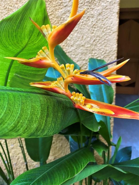 Cancun 2021 Iberostar flowers (1)