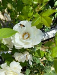 California 2021 flowers(3)