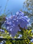 California 2021 flowers(8)