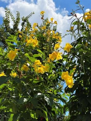 Flowers Riverwalk (3)